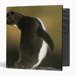 Rockhopper Penguin, Eudyptes chrysocome), Binder