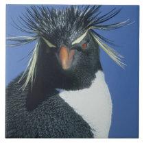 Rockhopper Penguin (Eudyptes chrysocome) Ceramic Tile