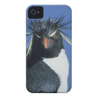 Rockhopper Penguin (Eudyptes chrysocome) iPhone 4 Cover