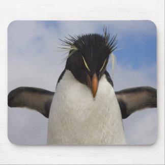 Rockhopper Penguin Eudyptes chrysocome Mouse Pad