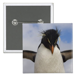 Rockhopper Penguin Eudyptes chrysocome Pinback Button
