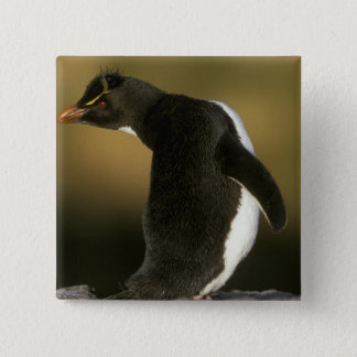 Rockhopper Penguin, Eudyptes chrysocome), Pinback Button