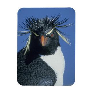 Rockhopper Penguin (Eudyptes chrysocome) Rectangular Photo Magnet
