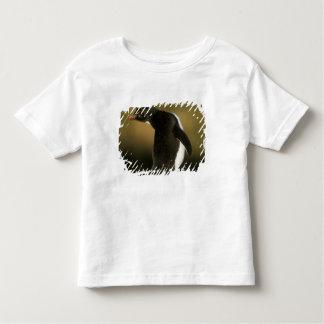 Rockhopper Penguin, Eudyptes chrysocome), Shirt