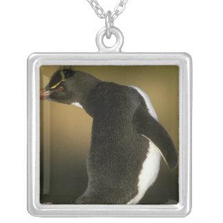 Rockhopper Penguin, Eudyptes chrysocome), Silver Plated Necklace