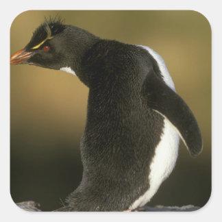 Rockhopper Penguin, Eudyptes chrysocome), Square Sticker
