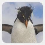 Rockhopper Penguin Eudyptes chrysocome Stickers
