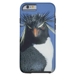 Rockhopper Penguin (Eudyptes chrysocome) Tough iPhone 6 Case