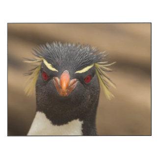 Rockhopper penguin portrait wood wall art