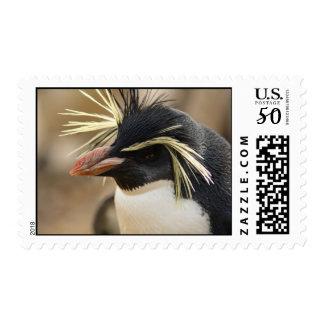 Rockhopper Penguin Postage Stamp