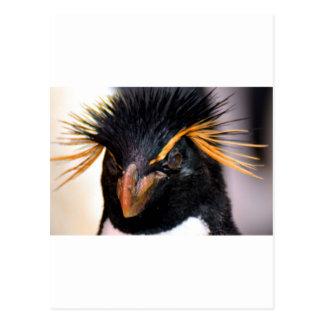 rockhopper penguin postcard