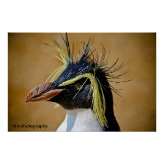 Rockhopper Penguin......... Posters