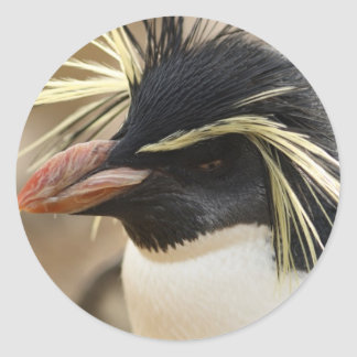 Rockhopper Penguin  Stickers