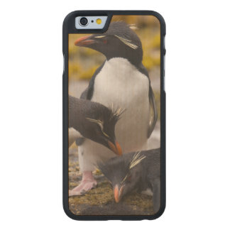 Rockhopper penguins communicate with each other carved® maple iPhone 6 case