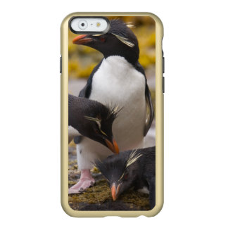 Rockhopper penguins communicate with each other incipio feather® shine iPhone 6 case