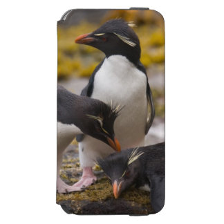 Rockhopper penguins communicate with each other iPhone 6/6s wallet case