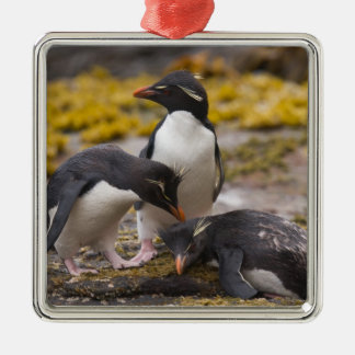 Rockhopper penguins communicate with each other metal ornament