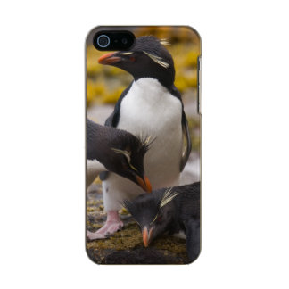 Rockhopper penguins communicate with each other metallic phone case for iPhone SE/5/5s
