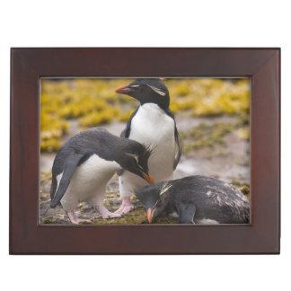 Rockhopper penguins communicate with each other keepsake box
