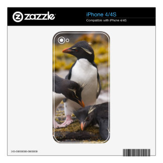 Rockhopper penguins communicate with each other skins for iPhone 4S