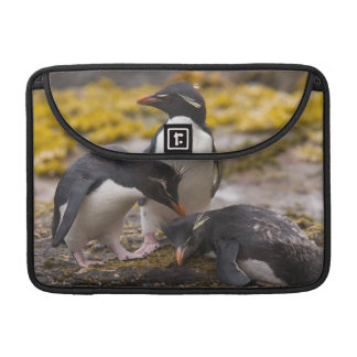 Rockhopper penguins communicate with each other sleeve for MacBook pro