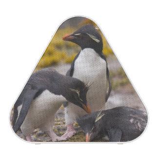 Rockhopper penguins communicate with each other speaker
