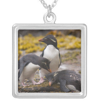 Rockhopper penguins communicate with each other square pendant necklace