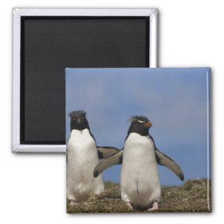 Rockhopper Penguins Eudyptes chrysocome 2 Inch Square Magnet