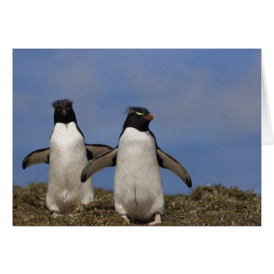Rockhopper Penguins Eudyptes chrysocome Card