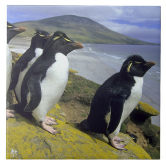 Rockhopper Penguins, (Eudyptes chrysocome), Ceramic Tile