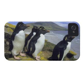 Rockhopper Penguins, (Eudyptes chrysocome), iPhone 4 Case-Mate Case