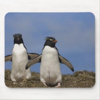 Rockhopper Penguins Eudyptes chrysocome Mouse Pad