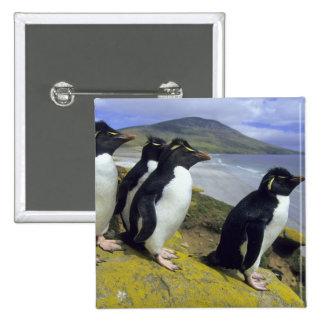 Rockhopper Penguins, (Eudyptes chrysocome), Pinback Button