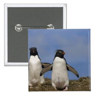 Rockhopper Penguins Eudyptes chrysocome Pinback Button