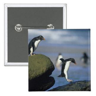 Rockhopper Penguins, Eudyptes chrysocome), Pinback Button