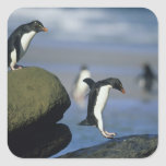 Rockhopper Penguins, Eudyptes chrysocome), Square Sticker