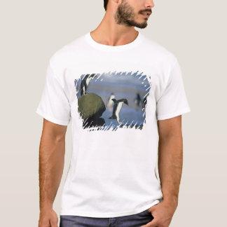 Rockhopper Penguins, Eudyptes chrysocome), T-Shirt