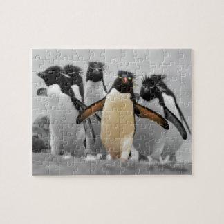 Rockhopper Penguins Jigsaw Puzzle