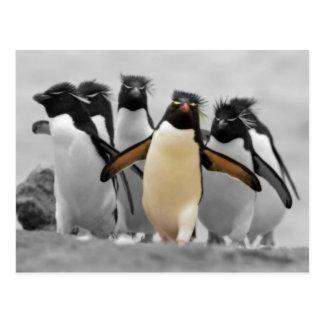 Rockhopper Penguins Postcard