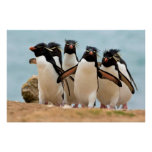 Rockhopper Penguins Poster from 8.99