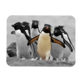 Rockhopper Penguins Rectangular Photo Magnet