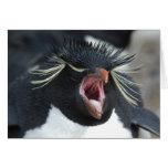 Rockhopper Yawn Card