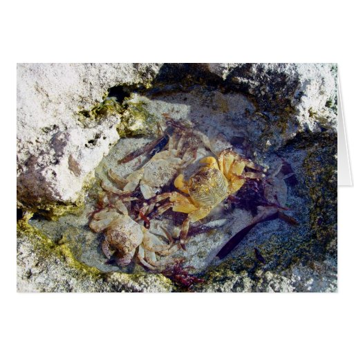 Rocks and Crabs Greeting Card