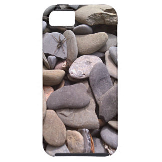 Rocks with Spider and a Fossil - iPhone 5 Case