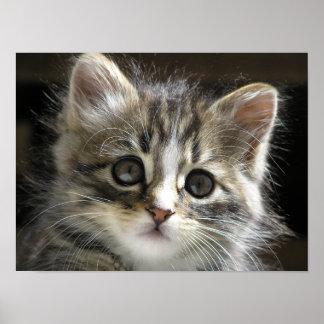 Rocky el poster 2 del gatito póster
