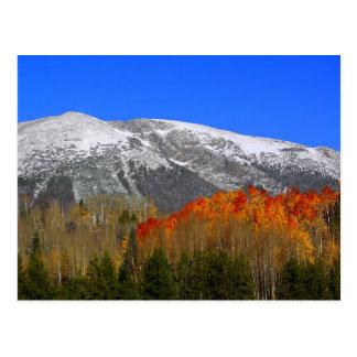 Rocky Mountain Autumn - Colorado Postcard