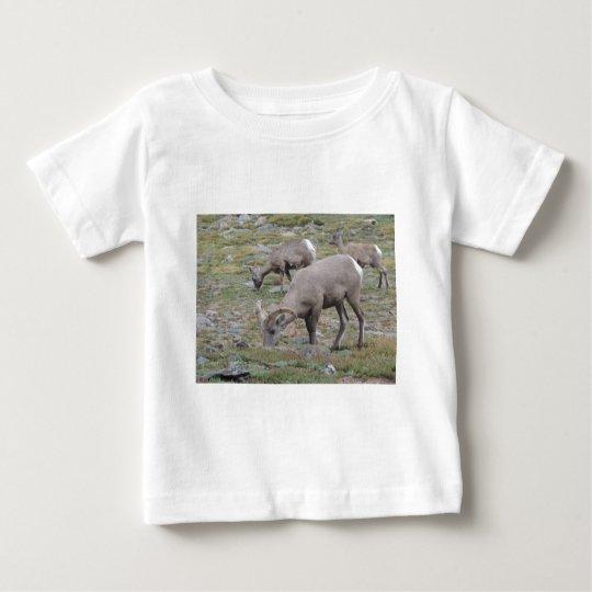 Rocky Mountain Big Horn Sheep Baby T-Shirt
