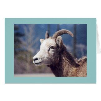 Rocky Mountain Big Horn Sheep Card