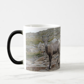 Rocky Mountain Big Horn Sheep Ewe Magic Mug