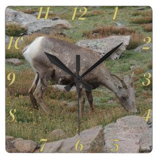 Rocky Mountain Big Horn Sheep Ewe Square Wall Clock